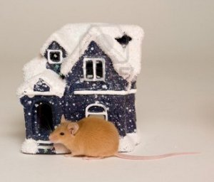 4017016-mouse-animal-vermin-pet-companion-skinning-rodent-tail-nose-house-snow-snow-winter-season-gifts-chri