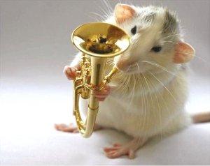 cute_rats_12